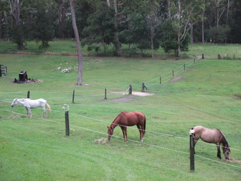 grassy paddocks