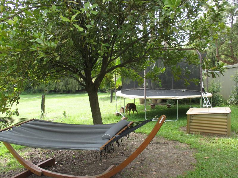 trampoline, swings and hammock