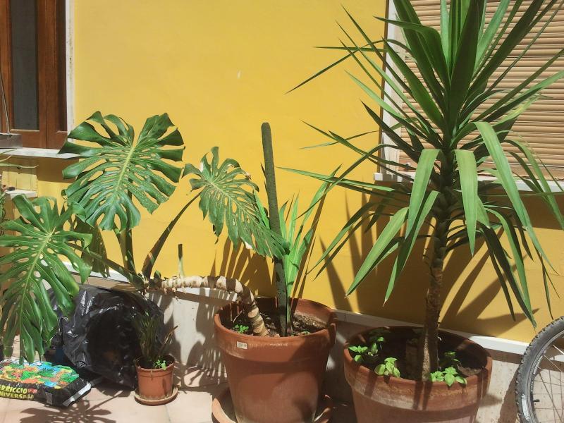 cortile con piante