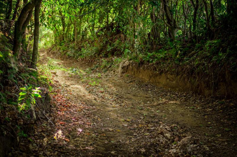 Walk trails