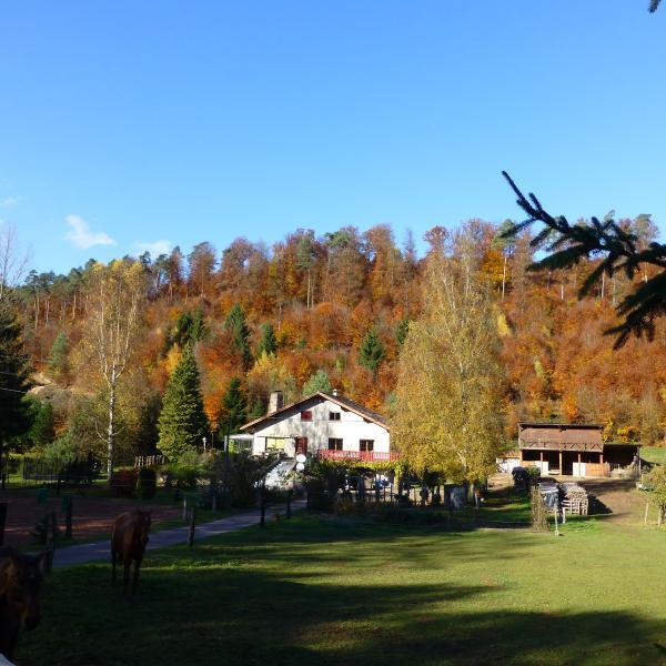 Gîte de la vallée en pleine forêt des vosges nord avec chevaux et lapins, casa vacanza a Lichtenberg