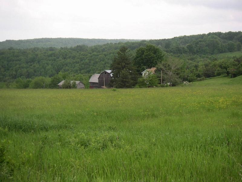 View of Homestead from the Pond and across the Hay Field