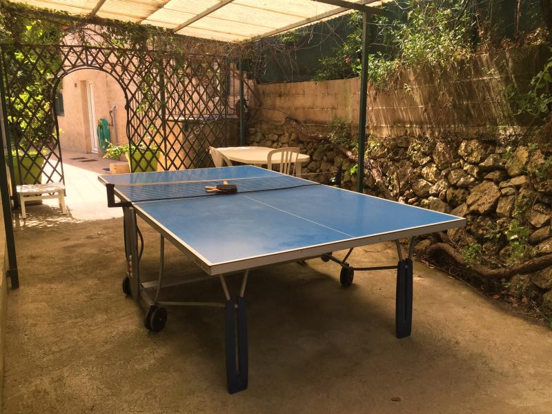 table tennis , let's play even at night