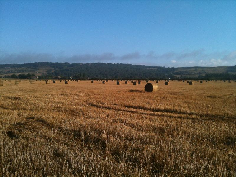 Romney Marsh at Harvest Time