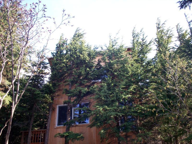 Alaska Cannabis Friendly Tree House, alquiler vacacional en Hope