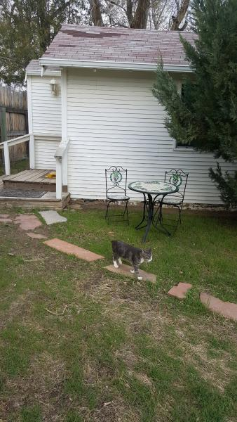 Large fenced yard, many cats to greet you