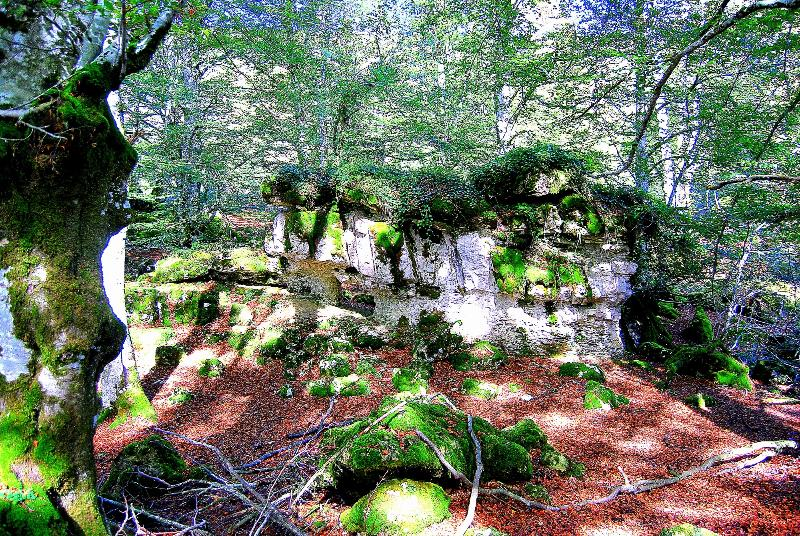 Bosques de urbasa