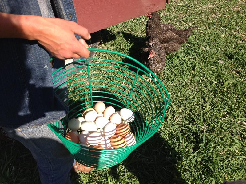 fresh eggs from the neighbor's farm
