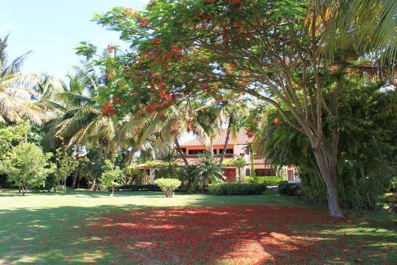 Flamboyan sul árvore da cidade no jardim da comunidade