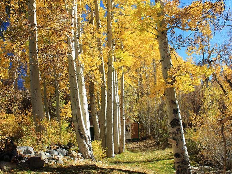 Elani Lodge in the Fall