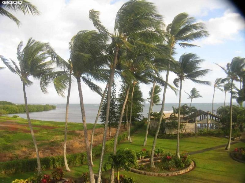 Tropical garden views