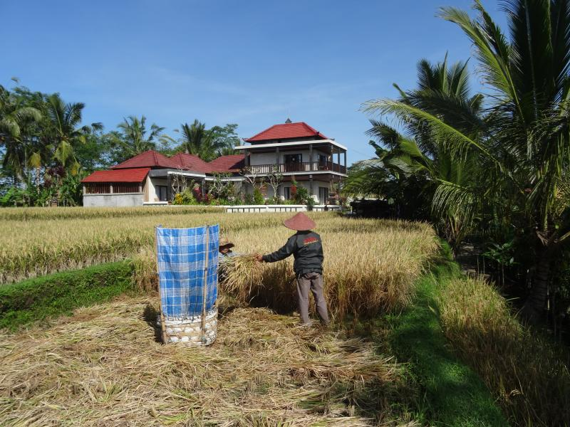 Villa in the rice fields north of Ubud