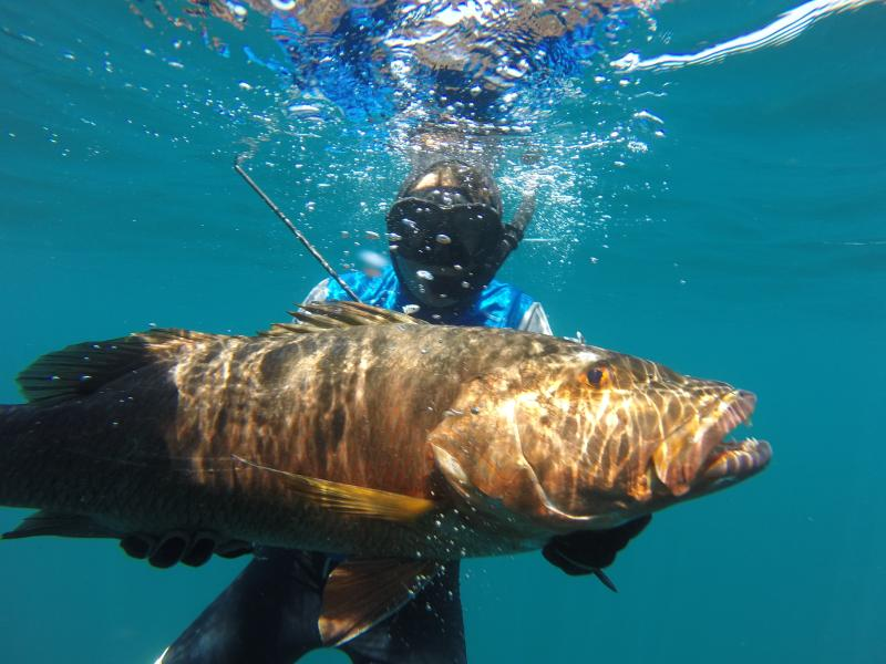 A Brazilian spear fisherman got this one & many others last April
