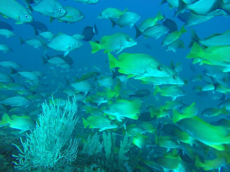 Spear fishing at Isla Ladrones. This was taken by free divers from Brazil