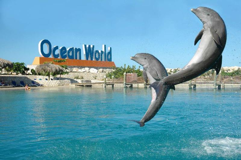Ocean World in Puerto Plata. 40 minutes drive from Villa