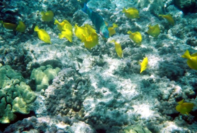Fantastic snorkeling right off from the beach