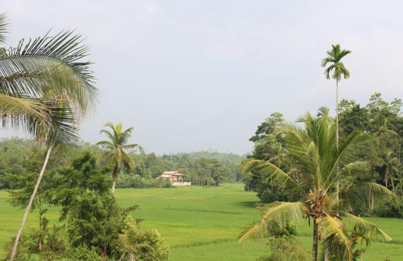 View from top of the estate overlooking paddy fields.  This is heart of rural Sri Lanka!