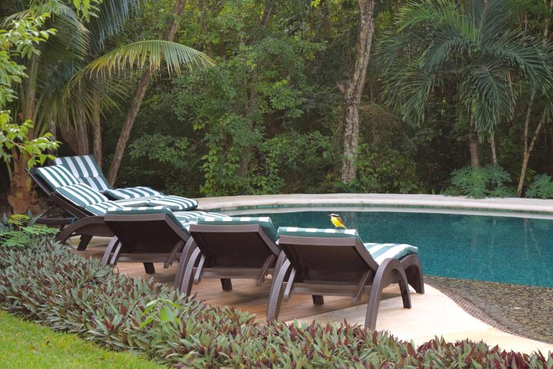 Enchanting pool and expansive garden grounds surrounded by tropical jungle