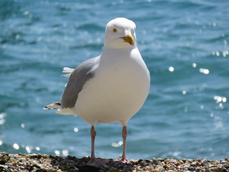 Durdle Beach