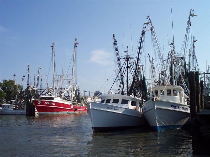Enjoy our local fresh seafood