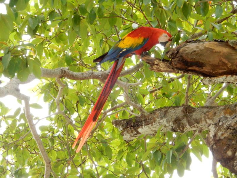 Friendly Macaws in the trees by The Treehouse