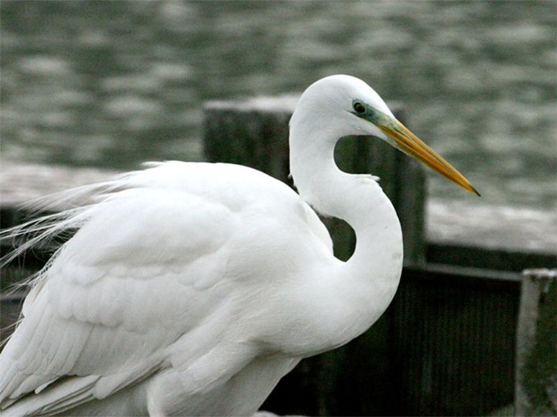 Surroundings: bird watching in the valley