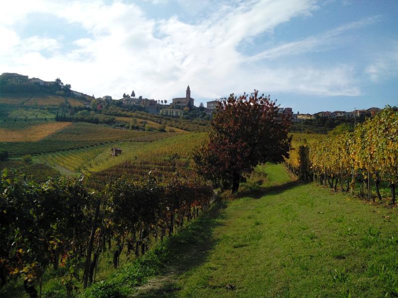 A landscape of Diano d'Alba from the wineyard near Casa Badinot.
