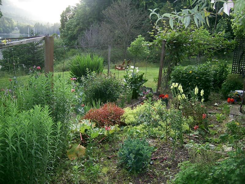garden near the house
