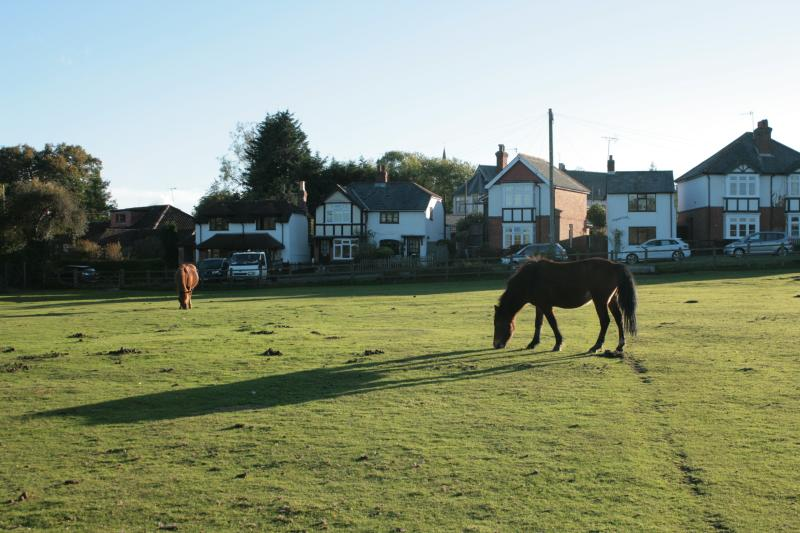 Ponies in front of the cottage