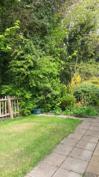Lovely sunny garden.