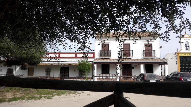 Plaza Acebuchal, 13. ACEBUCHE CENTENARIO