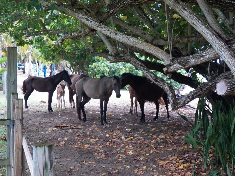 Wild Ponies on our Beach