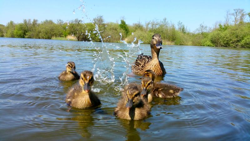 Lots of local wildlife and wildfowl to see