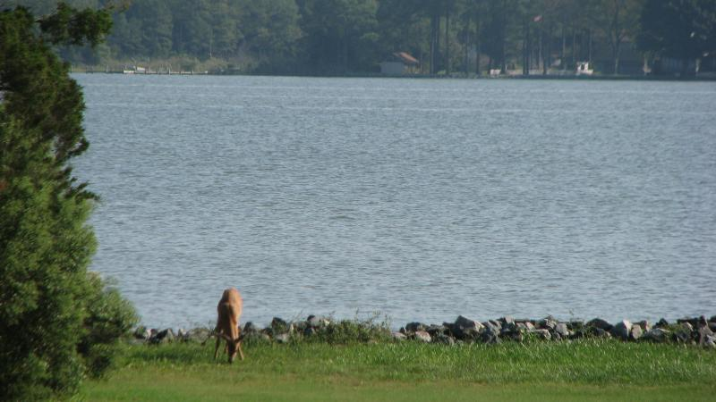 Oh yes, there are wild visitors daily at Deerpond