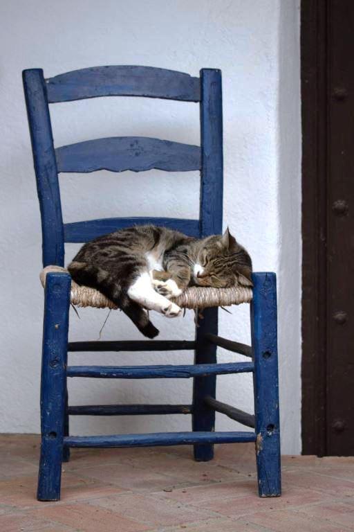 Katze Alicia ganz entspannt