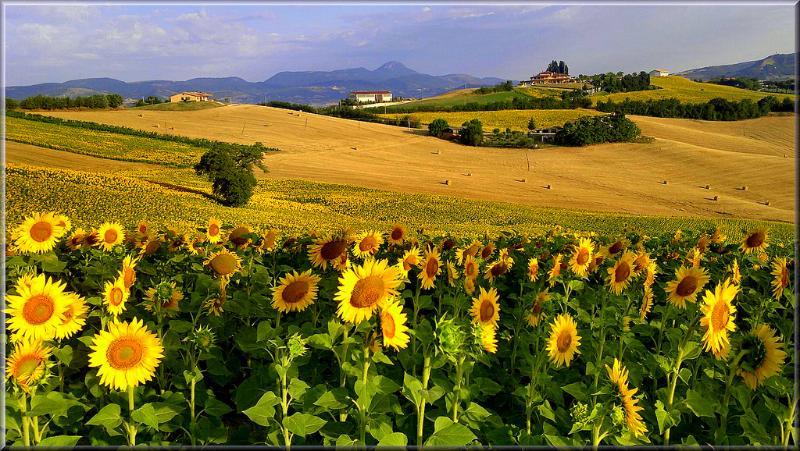 Le Marche sono una regione unica soprattutto per quanto riguarda la natura.