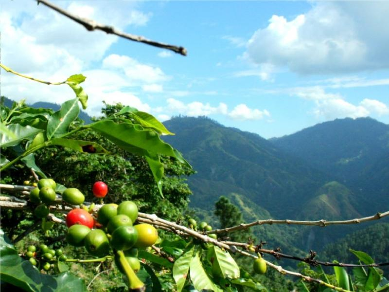 Best in the world Jamaican Blue Mountain coffee.