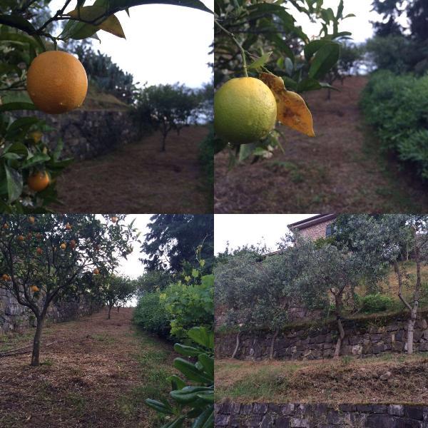 Frutteto a terrazzamenti