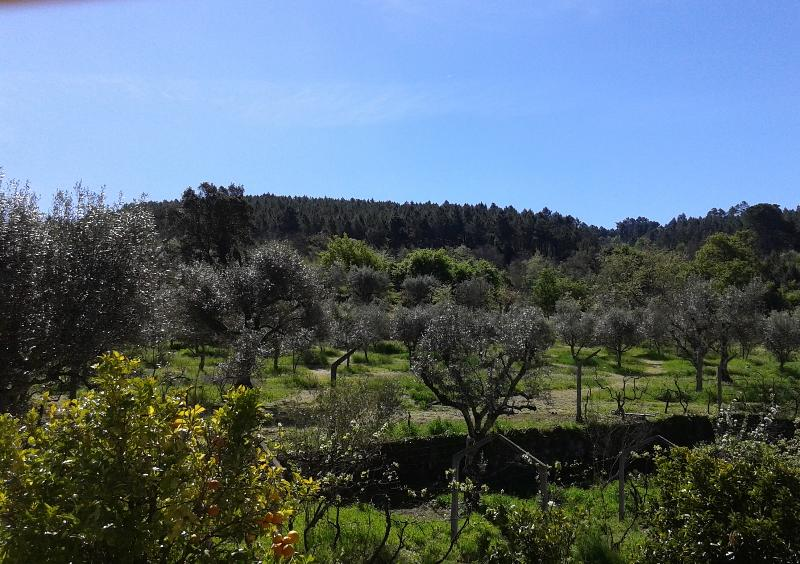 The Olive Grove from our house