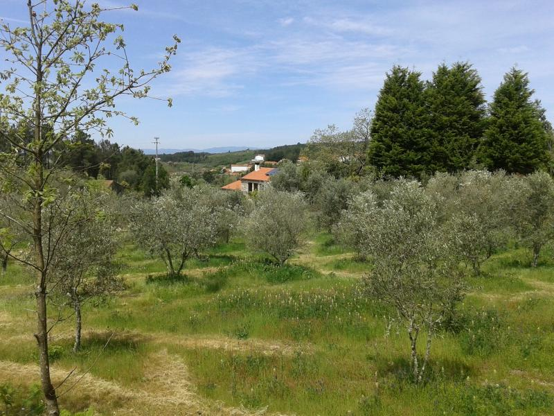 Our house from the Olive Grove