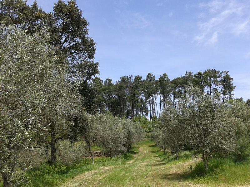 Part of the Olive Grove