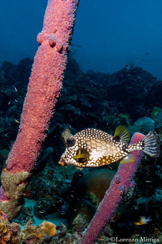 scuba diving with our on-site dive shop Div'Ocean Bonaire