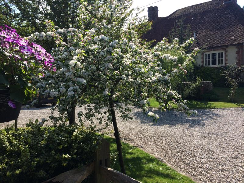 View from Chanctonbury Cottage (Spring)