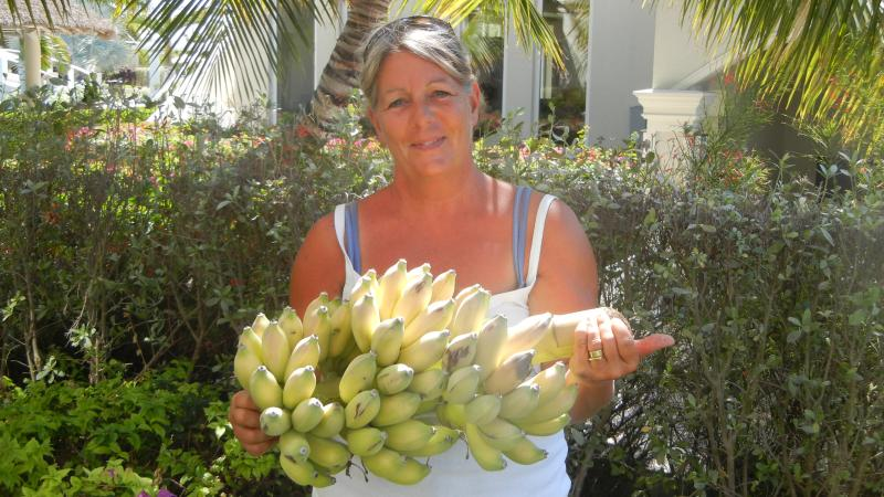 Debbie's first crop of bananas from her garden.