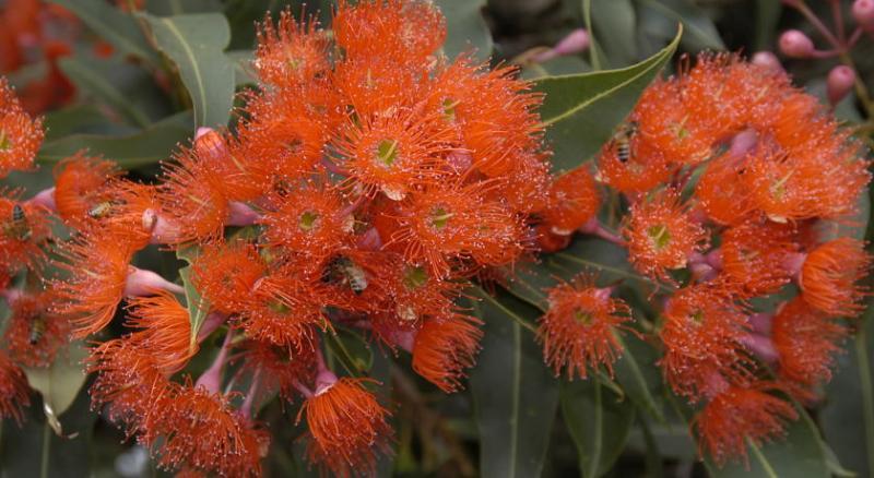 Ficifolia Lodge Kangaroo Island South Australia, holiday rental in Stokes Bay