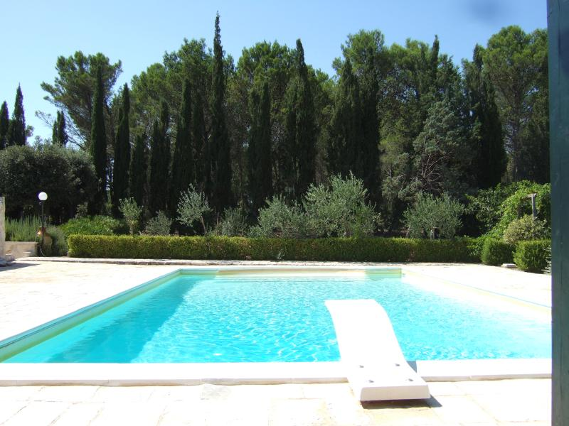 Large Pool with diving board looking towards our woods.