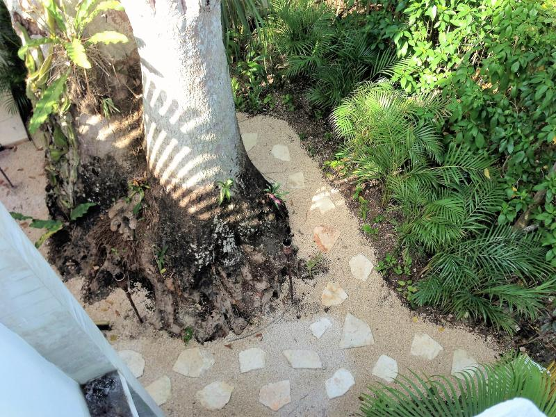 Rear garden and ancient despeinada palm tree