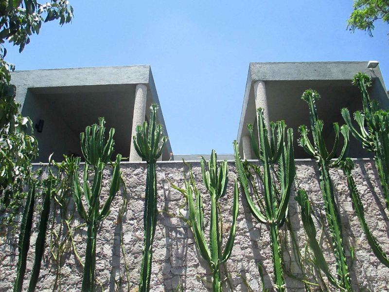 Our giant Euphorbia garden.
