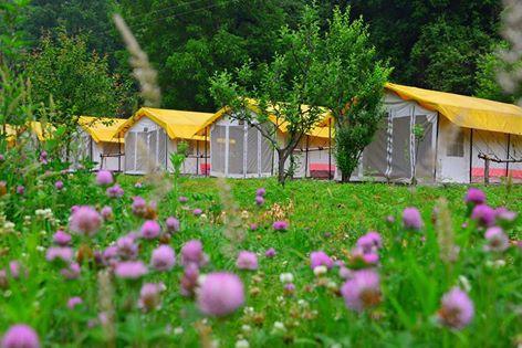 Into Wild Himalaya Camps Manali