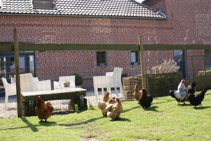 Um pequeno zoológico, os ovos de galinhas esperam por você ...